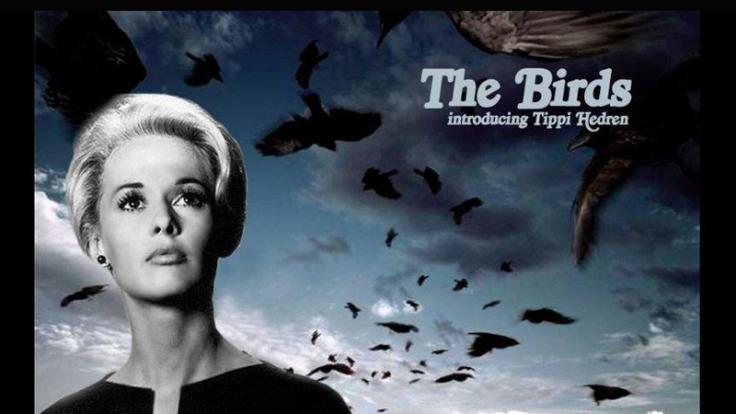 the birds introducing